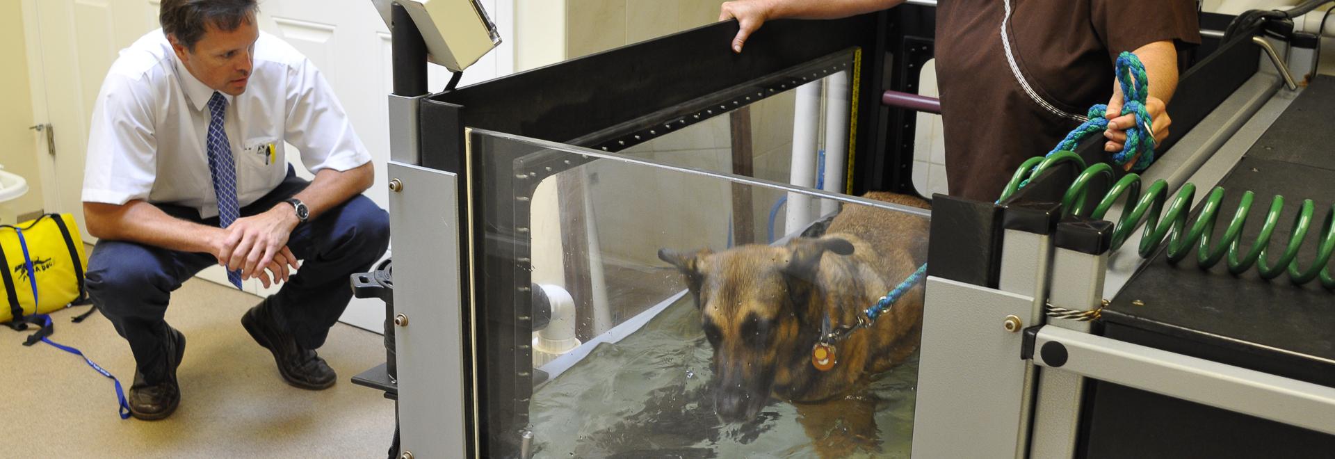 Veterinarian Services In Chicago Ridge Il Chicago Animal Rehab